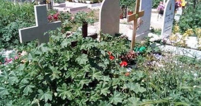 Roma cimitero di prima porta tombe tra blatte ed erbacce - Cimitero flaminio prima porta ...